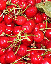 Heritage Recipes -- Sour Cherries for Cherry Cake